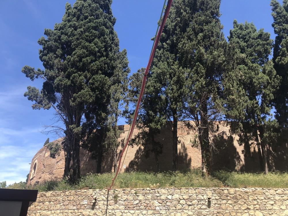 I cipressi italici attorno al Mausoleo